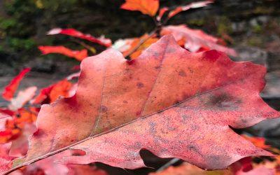 A new Leaf…